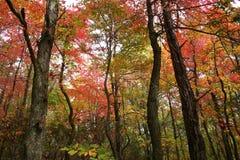 färgrik canopy Arkivfoton