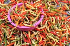 färgrik chili Arkivfoto