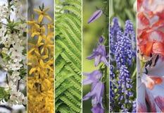 Färgrik collage av vertikala remsor som är horisontal Arkivbilder