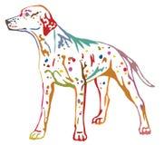 Färgrik dekorativ stående stående av den Dalmatian vektorn il för hund Arkivfoton