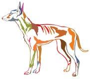 Färgrik dekorativ stående stående av den Podenco Ibicenco hunden ve Arkivfoto