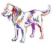 Färgrik dekorativ stående stående av hundryss Toy Terrier Arkivfoton
