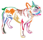 Färgrik dekorativ stående stående av vektorn för fransk bulldogg Arkivfoto