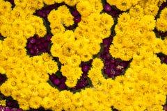 Färgrik designmodell av blommatextur och bakgrund Royaltyfria Bilder