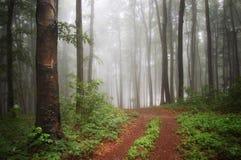 färgrik dimmaskog arkivfoton
