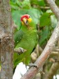 färgrik fågel Royaltyfri Fotografi