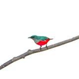 Färgrik fågel royaltyfria foton