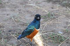 Färgrik fågel! Arkivfoton