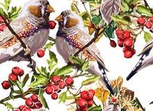 färgrik fågel, blomma och rönn Arkivfoton