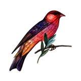 Färgrik fågel för vattenfärg Fotografering för Bildbyråer