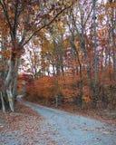färgrik fallbana Fotografering för Bildbyråer
