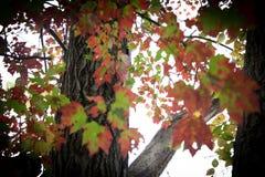 färgrik fallleaf Arkivbild