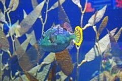 färgrik fisk Royaltyfri Fotografi