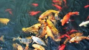 färgrik fisk Royaltyfria Bilder