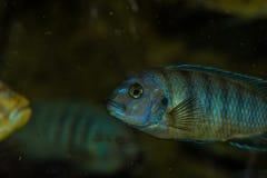 färgrik fisk Royaltyfria Foton
