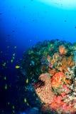 Färgrik fisk och koraller på en djup rev Royaltyfri Bild