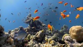 Färgrik fisk på vibrerande Coral Reef stock video