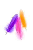 färgrik fjäder Arkivfoton