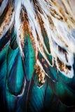 Färgrik fjädergrupp av någon fågel Royaltyfria Bilder