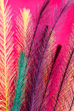 Färgrik fjäderlik bakgrund Royaltyfria Bilder