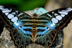 Färgrik fjäril royaltyfria foton