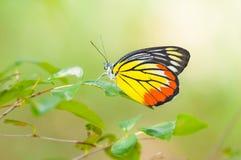 Färgrik fjäril Arkivbilder