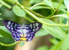 Färgrik fjäril i en trädgård arkivbild