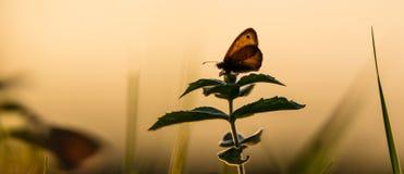 Färgrik fjäril i en våräng Arkivfoto