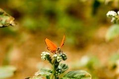 Färgrik fjäril som överst läggas av blomman arkivbilder