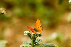 Färgrik fjäril som överst läggas av blomman arkivfoton
