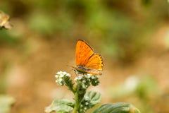 Färgrik fjäril som överst läggas av blomman fotografering för bildbyråer