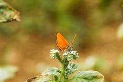 Färgrik fjäril som överst läggas av blomman royaltyfri fotografi