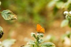 Färgrik fjäril som överst läggas av blomman royaltyfri bild