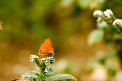 Färgrik fjäril som överst läggas av blomman royaltyfria bilder