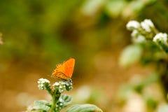 Färgrik fjäril som överst läggas av blomman arkivbild
