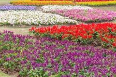 Färgrik flora på trädgården Arkivbilder