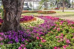 Färgrik flora på trädgården Arkivfoto