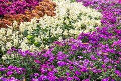 Färgrik flora på trädgården Royaltyfria Foton