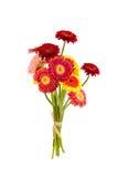 Färgrik gerber blommar buketten på vit bakgrund Arkivfoton