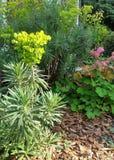 Färgrik grön lövverk med rosa blommor i trädgårds- komposttäckningsäng Arkivfoton