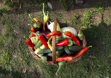 Färgrik grönsakkorg arkivbilder