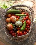 Färgrik grönsakkorg arkivfoto