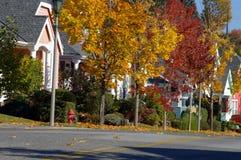 färgrik grannskap