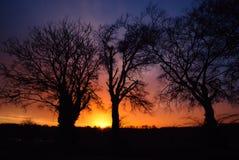 Färgrik gryning och silhouetted tree& x27; s Arkivbilder