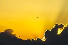 Färgrik gul soluppgång, solnedgångmoln och solstrålar, natur, bakgrund, landskap Fotografering för Bildbyråer