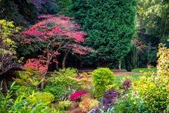 Färgrik härlig engelskaträdgård under nedgångsäsong Arkivbild