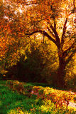 färgrik höst Royaltyfri Foto