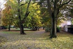 Färgrik höst i Rebstockparken, Frankfurt - f.m. - strömförsörjning Royaltyfri Fotografi