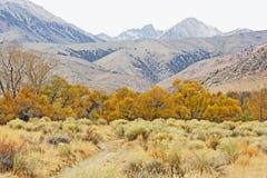 Färgrik höst i toppig bergskedja Nevada royaltyfria foton