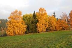 Färgrik höst - träd i höst royaltyfria bilder